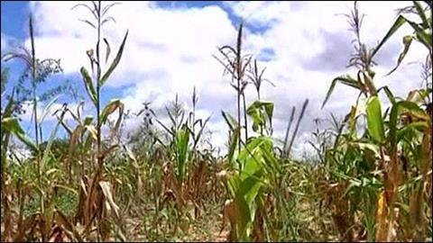 American drought and crop failure